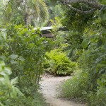 Sejala Hut path to beach