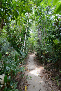 rain-forest-walk