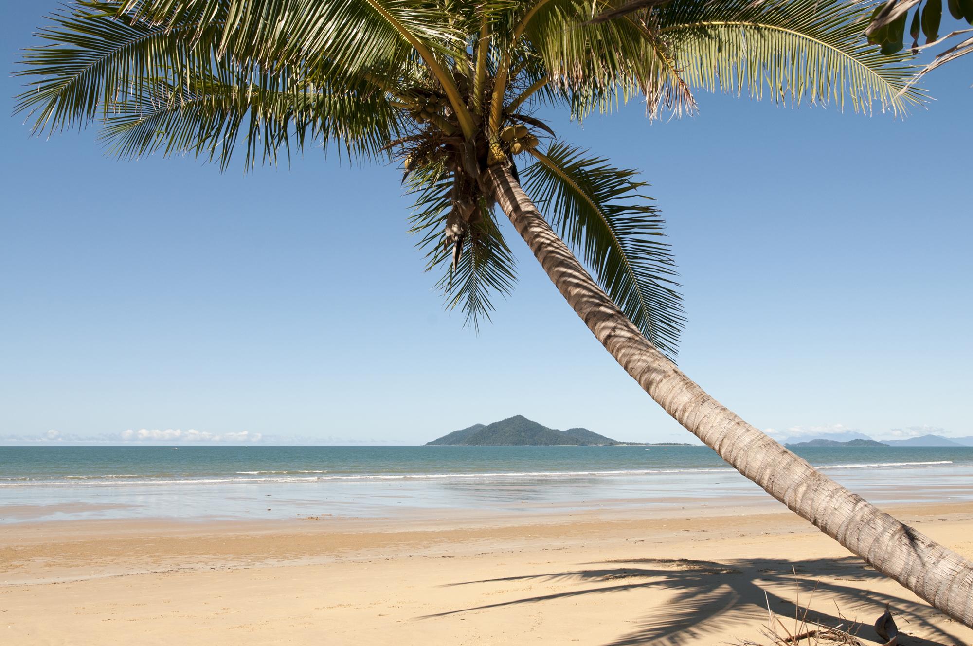 sejala coconuts-web
